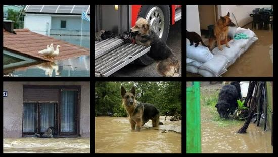 zivotinje-poplava