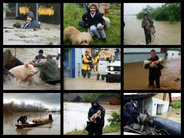 zivotinje-poplava1