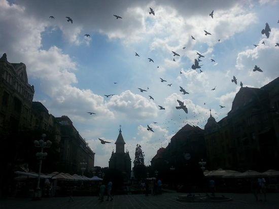 Neobičan detalj na Trgu Pobede: Naišao je oblak, a jato golubova poletelo u tom trenutku