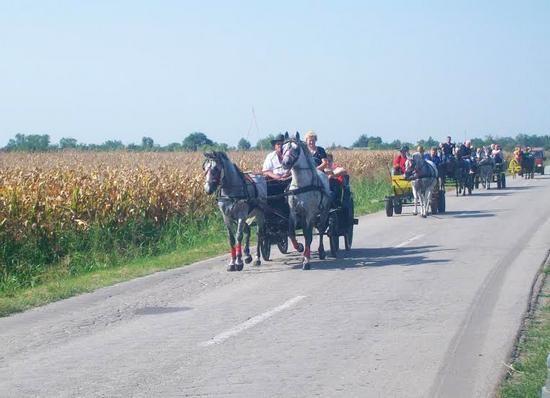 festival-kukuruza
