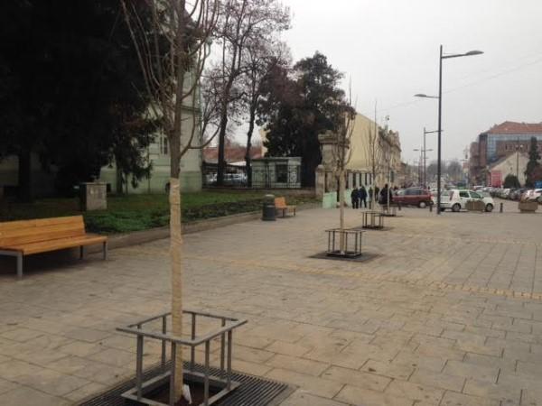 sadnja-drveca2