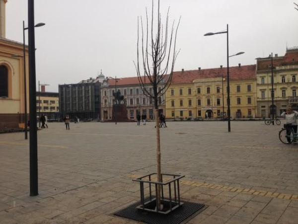 sadnja-drveca