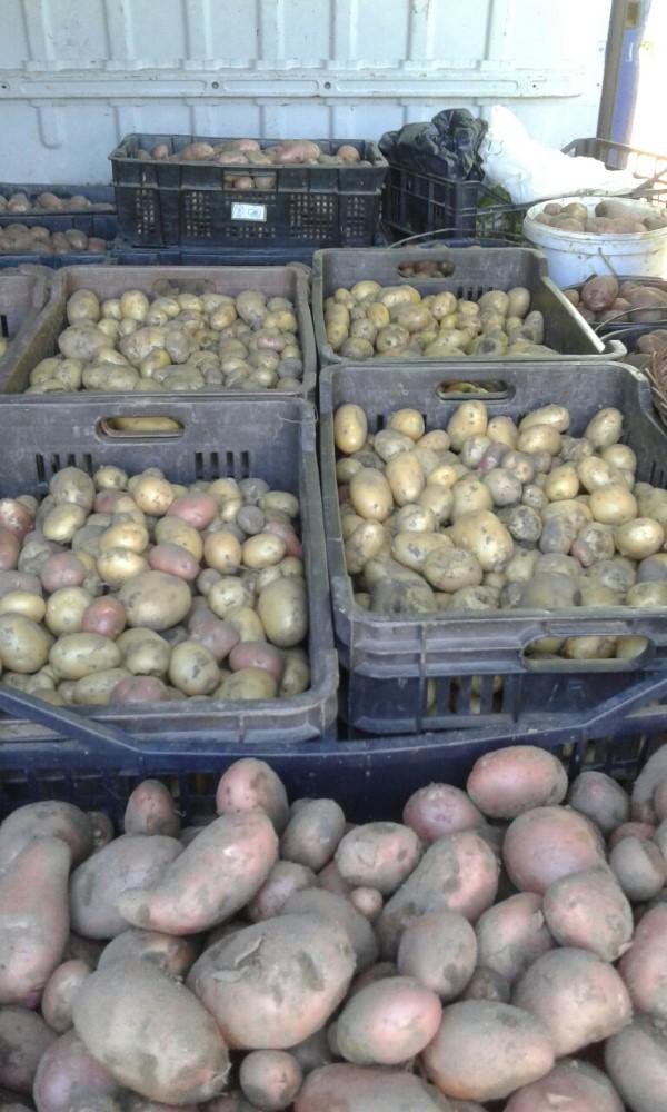 soksic-krompir-gajba-custom