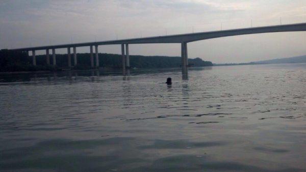 zoran-sremac-dunav-most