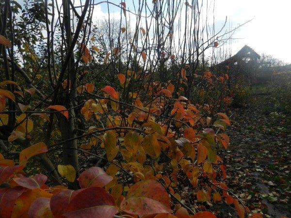 vocnjak-jesen