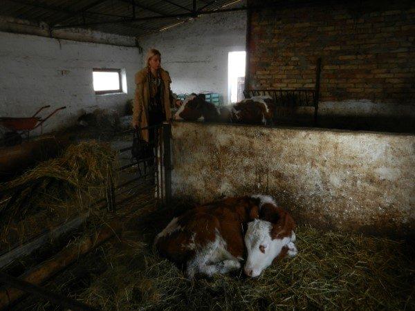 Poljoprivredna-skola-telici