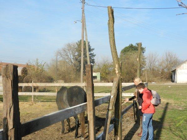 Poljoprivredna-skola-konj-marija