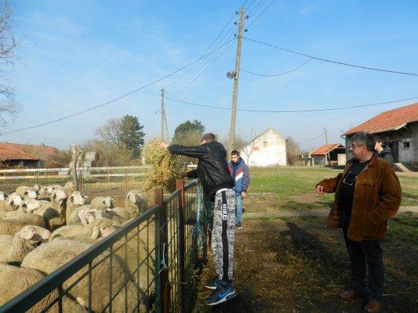 Poljoprivredna-skola-hranjenje-ovaca
