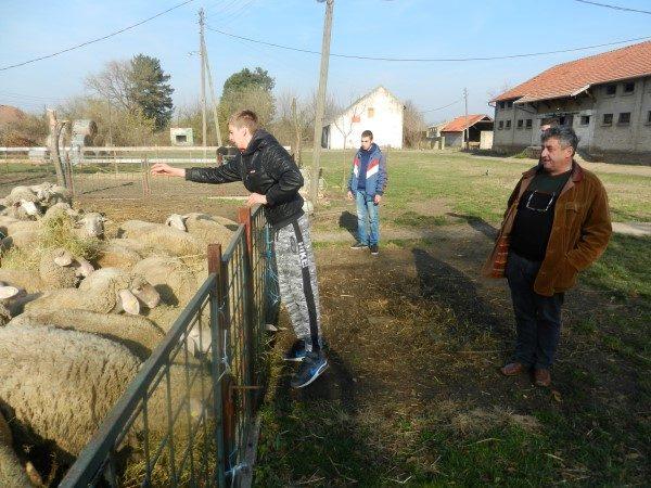 poljoprivredna-skola-hrane-ovce