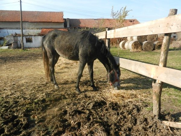 Poljoprivredna-skola-kobila
