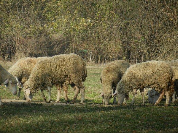 Poljoprivredna-skola-ovce