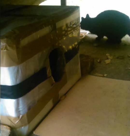 skloniste za mace