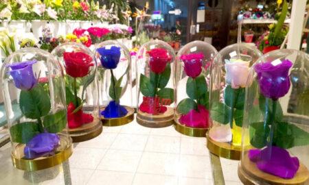 Dehidrirana ruža u cvećari Evergreen